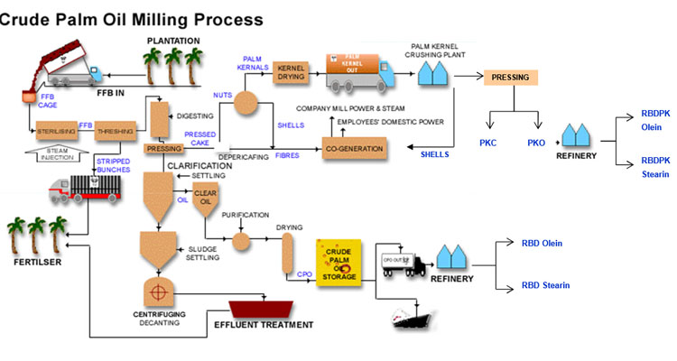Crude Palm Oil Production Process Palm Oil Processing