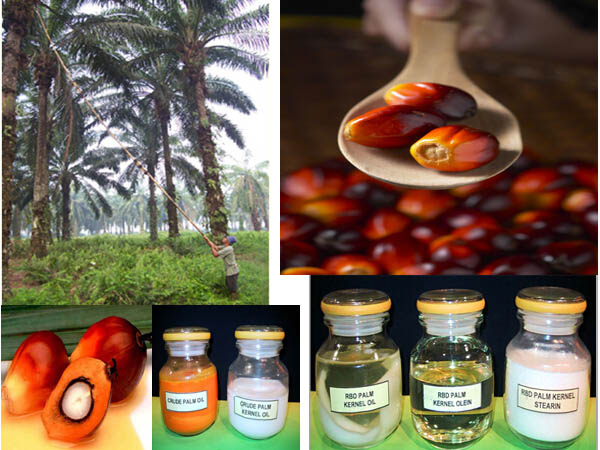 palm oil and palm fruit